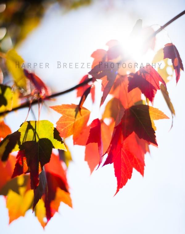 Rebekah Sapp Photography